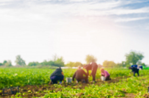 workers-work-field-harvesting-manual-labor-farming-agriculture-agro-industry_72572-32